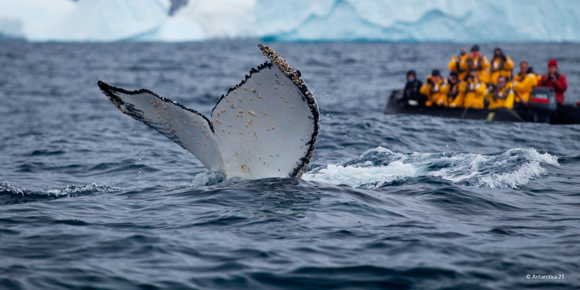 Personalized, tailor-made tour to see wildlife in Antarctica