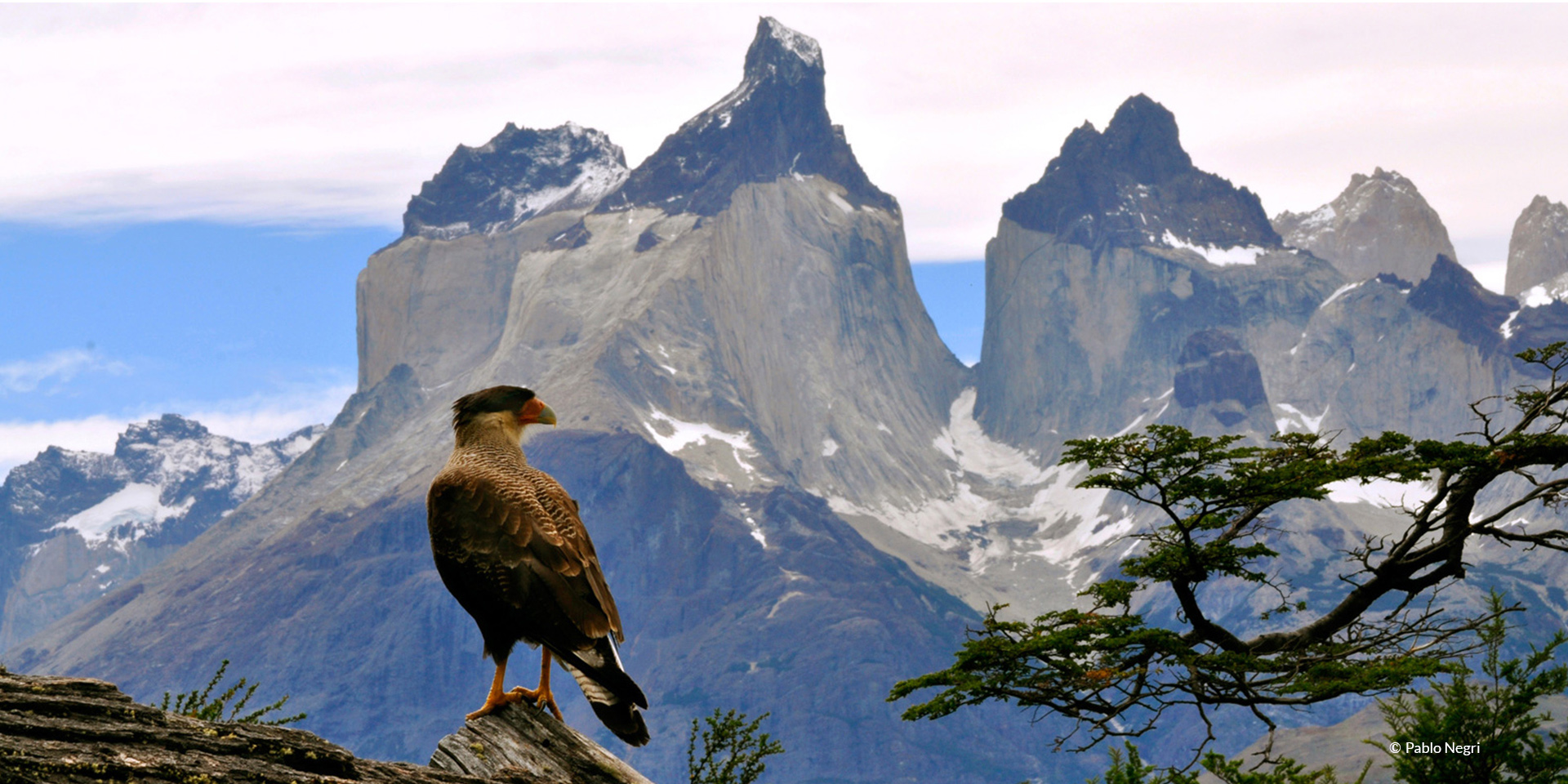 Exclusive, private birding tour in Patagonia Park Chile